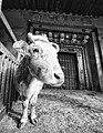 Tibet (5134467125).jpg