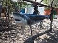 Tiburón en playa de Cartagena.JPG