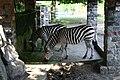 Tierpark-hamm-zebras.jpg