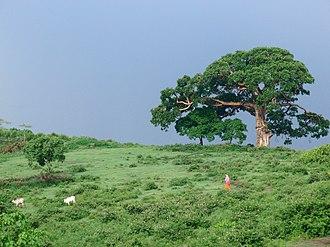 Awasa - Woman with some livestock on the top of Awasa Hill