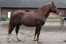 Chestnut Coat Wikipedia
