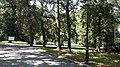 Town Park in Głogówek, 2019.08.09 (01).jpg