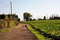 Track to Stowlangtoft Church - geograph.org.uk - 1586297.jpg