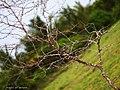 Tree (51247828).jpeg