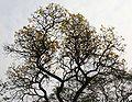 Tree I IMG 3924.jpg