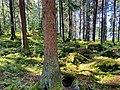 Trees and mossy rocks in Meri-Rastila, Helsinki, Finland, 2021.jpg