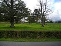 Trees at Mid Locharwoods - geograph.org.uk - 565452.jpg