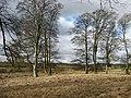 Trees by Greenknowe Tower - geograph.org.uk - 739259.jpg