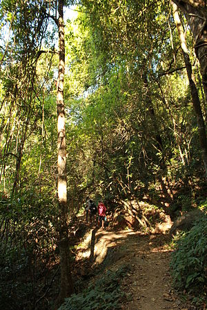 Paithalmala - Forest trail towards the hill