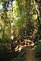 Trekkers through the forest trail.JPG
