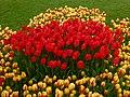 Tulip 1300165.jpg