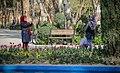 Tulip flowers in Tehran's parks, Nowruz 2018 (13961228001128636570940650411689 14885).jpg