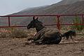 Turkmen Studfarm - Flickr - Kerri-Jo (59).jpg