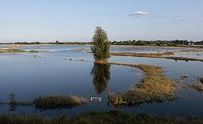 Tussen Slijk-Ewijk en Andelst, de Waal vanaf de Waaldijk aan het eind van hoog water IMG 9905 2021-07-22 19.47.jpg