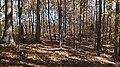 Twin Lakes State Park Fall Hike (15105424574).jpg