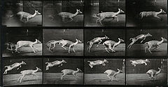 Two deer jumping. Photogravure after Eadweard Muybridge, 188 Wellcome V0048764.jpg