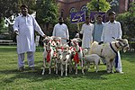 USAID Launches Women Empowerment Initiative in the Livestock Sector of South Punjab (34548213415).jpg