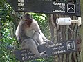 Ubud Monkey Forest 01.jpg