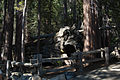 United States - California - Sequoia National Park - 17.jpg