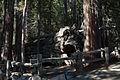 United States - California - Sequoia National Park - 17.jpg