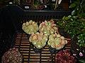 Výstava květin doplněna o prodej řemeslných výrobků v Pohledu 164.jpg