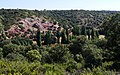 Valle del Cañamares. (45220520021).jpg