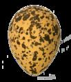 Vanellus spinosus MHNT.png