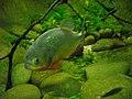 Vannes - aquarium (20).jpg