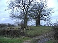 Venerable trees, near Chedglow - geograph.org.uk - 342858.jpg