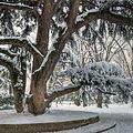 Very Old Tree - Parco del Popolo, Reggio Emilia, Italy - February 2, 2012.jpg