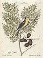 Verzameling van uitlandsche en zeldzaame vogelen (Tab. LXXXVI) (7894250368).jpg
