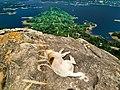 Victoria Reservoir and Dog.jpg