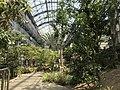 View in greenhouse of Innoshima Flower Center 3.jpg