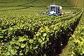 Vignoble Champagne Cl j Weber06 (23569095442).jpg