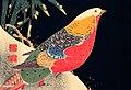 Vintage woodblock prints by Itō Jakuchū digitally enhanced by rawpixel-com-1.jpg