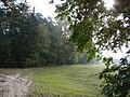 WILCZE ŁUGI wiosna 31 - panoramio.jpg