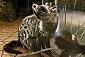 WLA hmns African Civet.jpg