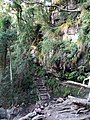Walking path and stairs at Cecilia Waterfall.jpg