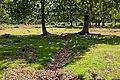 Warwickslade Cutting, a planned meander - geograph.org.uk - 1464550.jpg