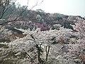 Watari, Fukushima, Fukushima Prefecture 960-8141, Japan - panoramio (1).jpg