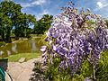 Water Garden (9060426540).jpg