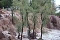 Water flow after rain Sindh.jpg