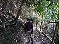 Way to falls-2-meenmudii-kerala-India.jpg