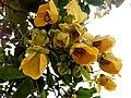 Wayanadan-random-flowers IMG 20180524 153444 HDR (42378235681).jpg