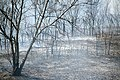 Wayne National Forest (3619602309).jpg