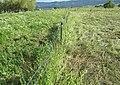 Weeds63 (27298707359).jpg