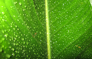 Macro of Wet Leaf