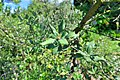 Wikipedia 13. Fotoworkshop Botanischer Garten Erlangen 2013 by-RaBoe 011.jpg