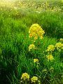 Wild flowers near ditch.jpg