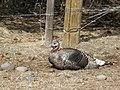 Wildlife105 (39076922831).jpg